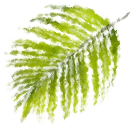 Oil painting Green leaf of palm tree on white background photo