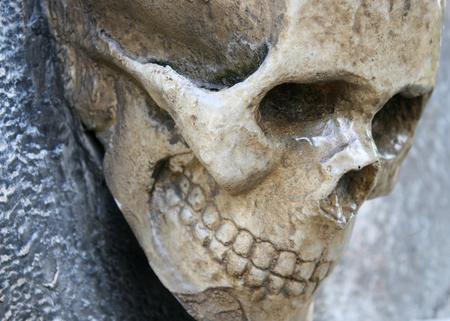 human skull on the rock photo