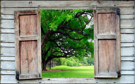 open windows: árbol grande y ventana de madera vieja