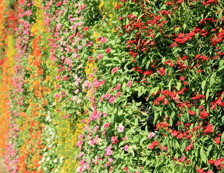 Pared de flores jardín vertical Foto de archivo - 35356779
