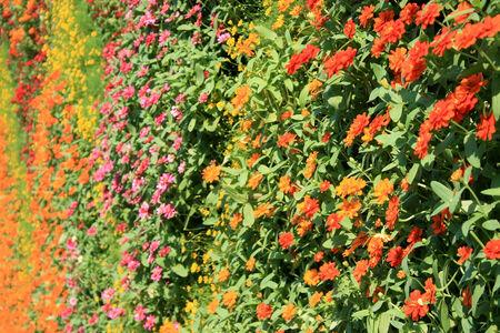 Pared de flores jardín vertical Foto de archivo - 35356780