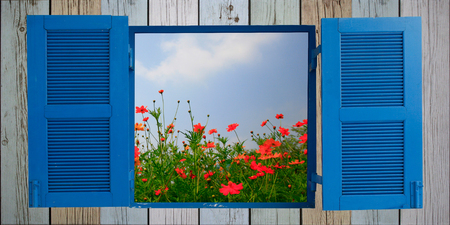 cosmos flower and old wood window photo