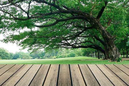 english oak: rustic wood floor in front of the big tree