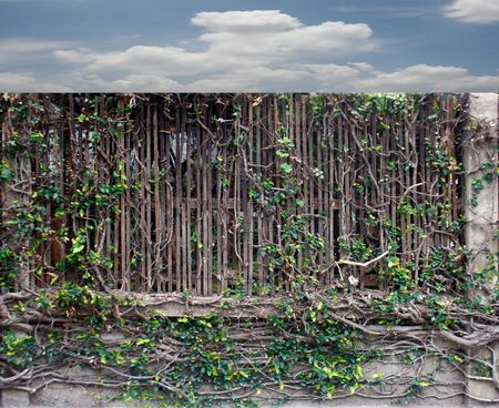 branch with leaves and dry branches fence background photo