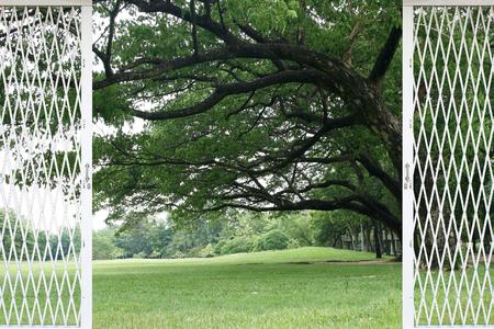 land slide: green grass under Big tree in the park