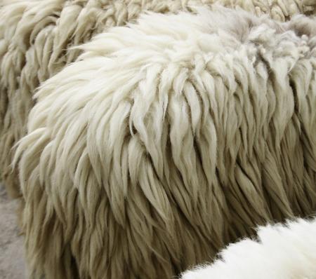 sheepskin: Sheepskin Background
