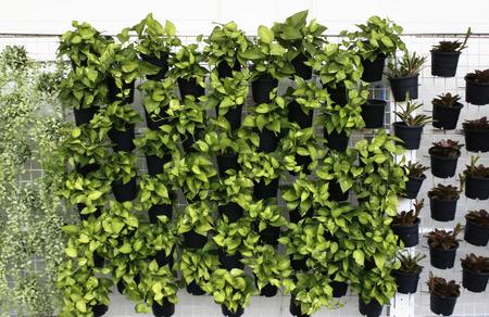 vertical: modelo planta verde vertical en muchos pote negro Foto de archivo