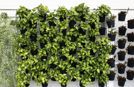 vertical: vertical green plant pattern in many black pot