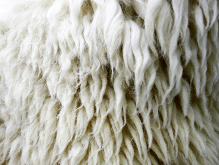 warm things: Sheepskin Background