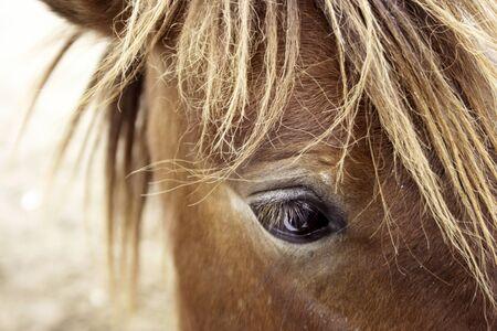 black eye: head horse Stock Photo
