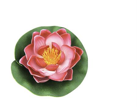 fiore isolato: Fiore di loto isolato su bianco