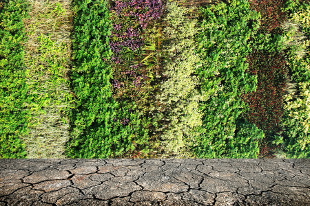 brake fern: vertical garden on crack ground Stock Photo