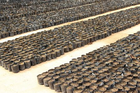 seeding: rows of soil in black bags for seeding