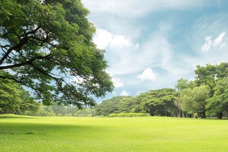 Big trees in the garden
