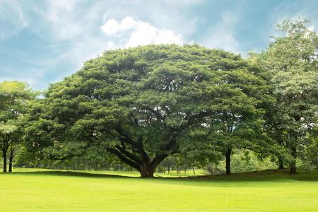 庭には大きな木
