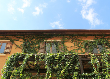 climbing frames: Old house wall with windows covered by leaves