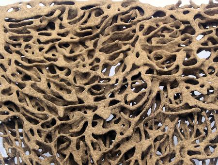 nests: termite nests white background