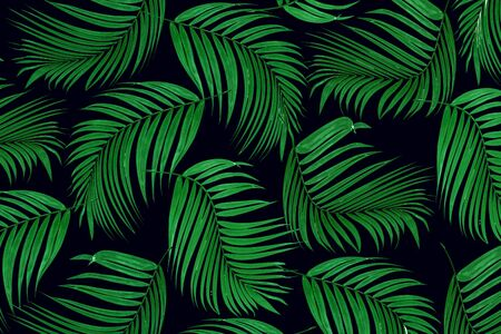 tropical fruit: Green leaf of palm tree for background