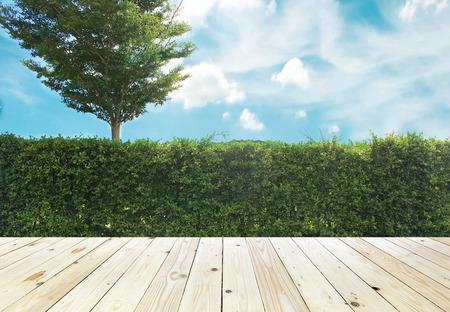 ornamental shrub: Grown tree wall and ornamental shrub