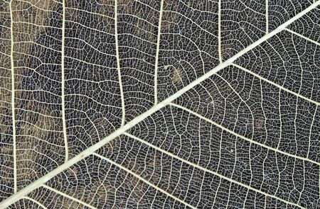 dried: Dried leaves