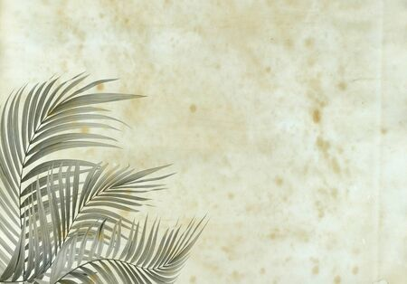 desperado: old paper background with palm leaf : still life