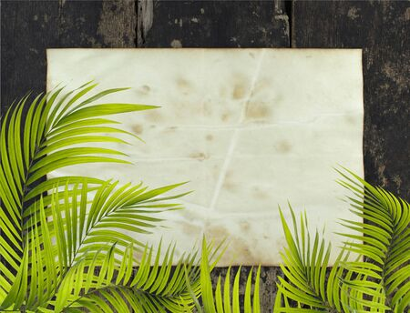 desperado: old paper background with palm leaf Stock Photo