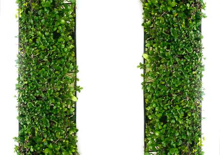 verde planta de hojas en la pared