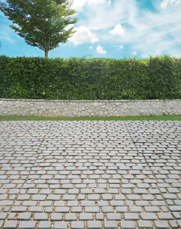 ornamental shrub: Grown tree with brick wall and ornamental shrub and cobble stone street Stock Photo