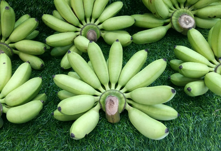 bunched: many green bananas Stock Photo