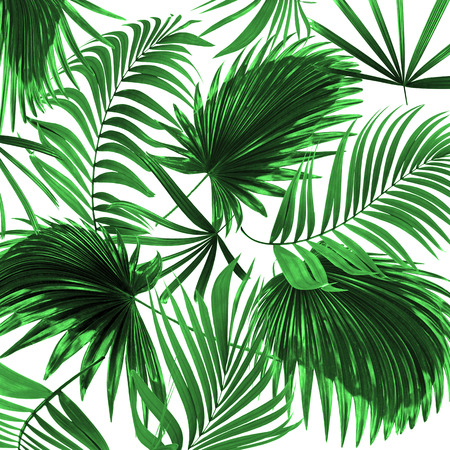single leaf: leaves of palm tree on white background Stock Photo