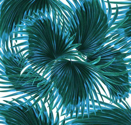 Grüne Blätter der Palme auf weißem Hintergrund