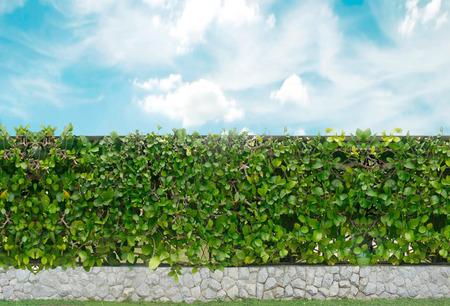ornamental shrub: brick wall and ornamental shrub
