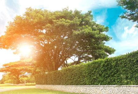 レンガの壁とバースト光と観賞用低木に成長した木
