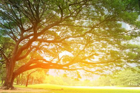 grote boom met takken met burst licht