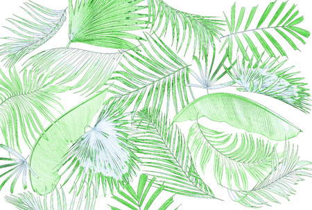 feathery: leaf of palm tree background