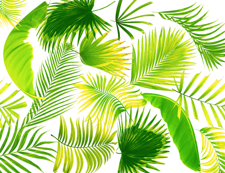 palm lined: leaf of palm tree background
