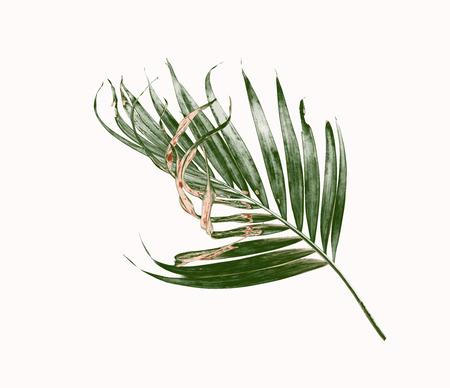 緑のヤシの葉は白い背景を分離します。