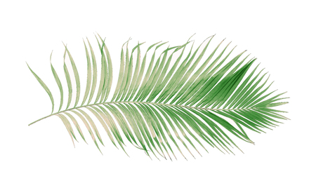 concept summer with green palm leaf from tropical . frond floral leaves branches tree isolated on white pattern background. flat lay, top view.