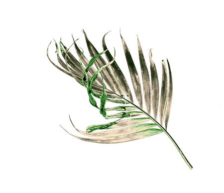 hoja de palma verde aislada en el fondo blanco