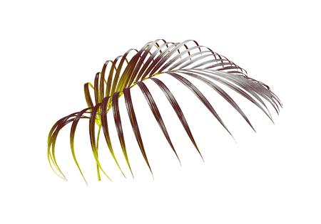 green leaf of palm tree isolated on white background Stockfoto