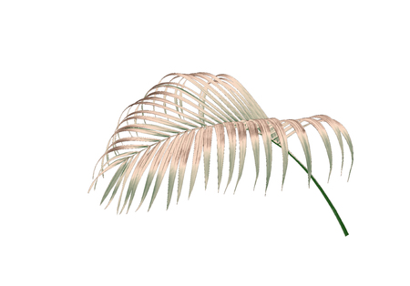 green leaf of palm tree isolated on white background Stock Photo