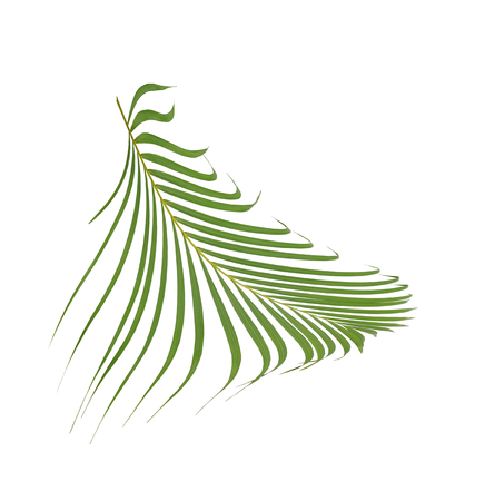 green palm leaf on white background Фото со стока