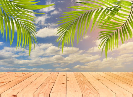 green palm leaf for summer background Stock Photo
