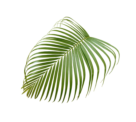 green palm leaf isolated on white background Stock Photo