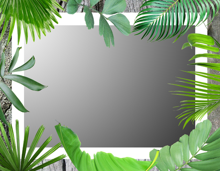 green botanical tropical palm leaves frame background