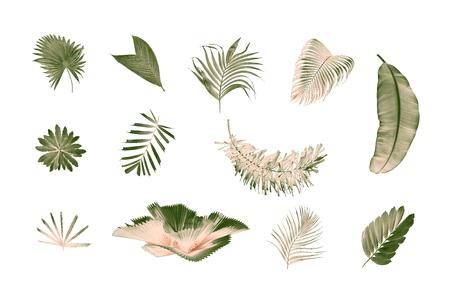set of palm leaf on white background