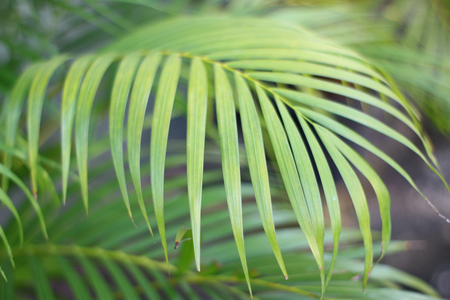 green tropical palm leaf with shadow on white wall Stock Photo