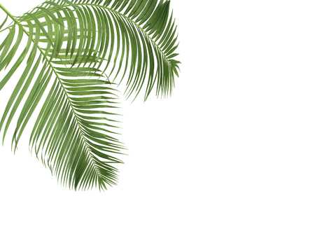 green palm leaves on white background