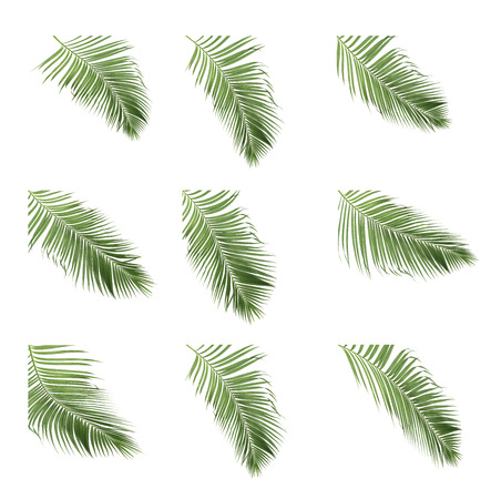 Set of coconut frond and palm leaf tree isolated on white background