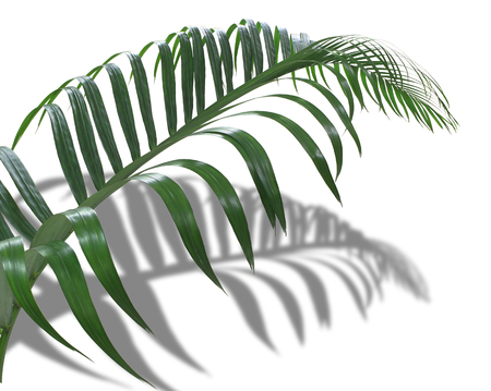 concept summer with green frond palm leaf from tropical with shadow branches tree isolated on white pattern background Stock Photo